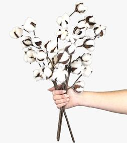 "Cotton Stems - 3 Stems/Pack - 10 Cotton Buds/Stem - 20"" Tal"